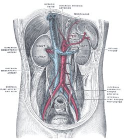 gray-anatomie-illustrationen
